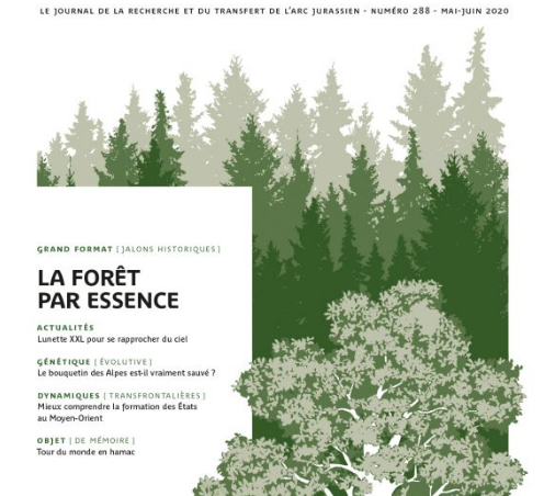 Parution d'en direct n°288 – La forêt par essence
